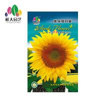 迷你向日葵种子小袋松大园艺家庭阳台盆栽精选花卉蔬菜种子易养易活