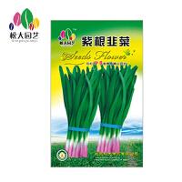 紫根韭菜 花种子(大袋)松大园艺四季种盆栽花种子 易活四季播