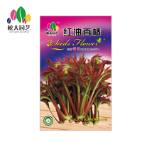 红油香椿蔬菜种子大袋家庭室内四季易种植盆栽