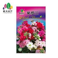 紫罗兰 花种子(大袋)松大园艺阳台盆栽*花卉种子 易养易活