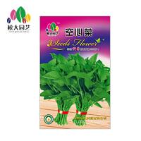 空心菜 花种子(大袋)松大园艺四季种花种子盆栽四季种子易活