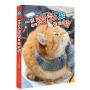 一只名叫鲍勃的流浪猫 (升级版)