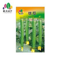 丝瓜 花种子(大袋)松大园艺四季种花种子盆栽四季种子易活